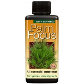 Palm focus, 300 ml