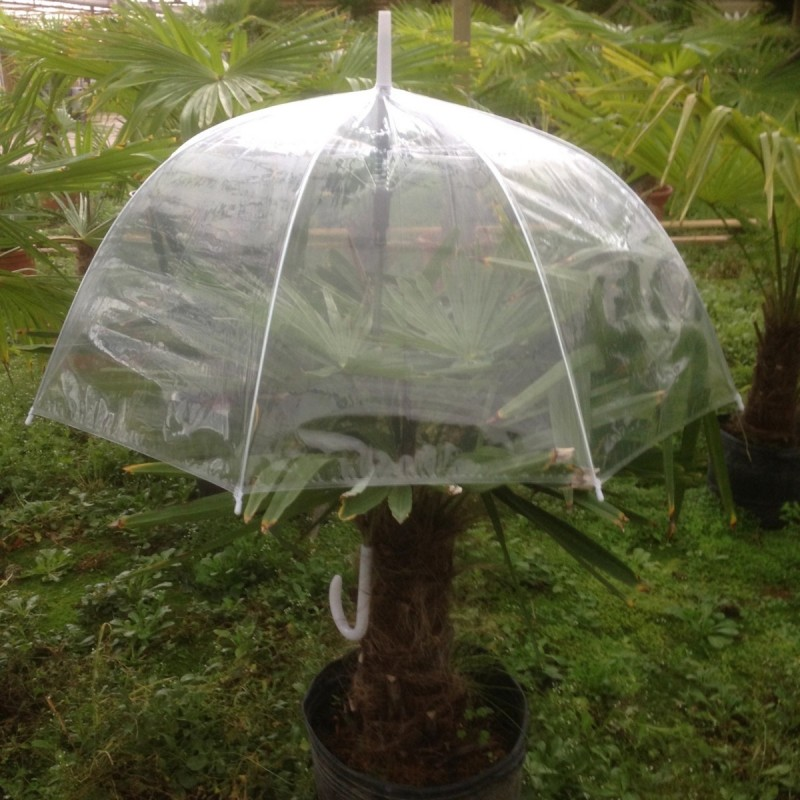 Rain protection for palm